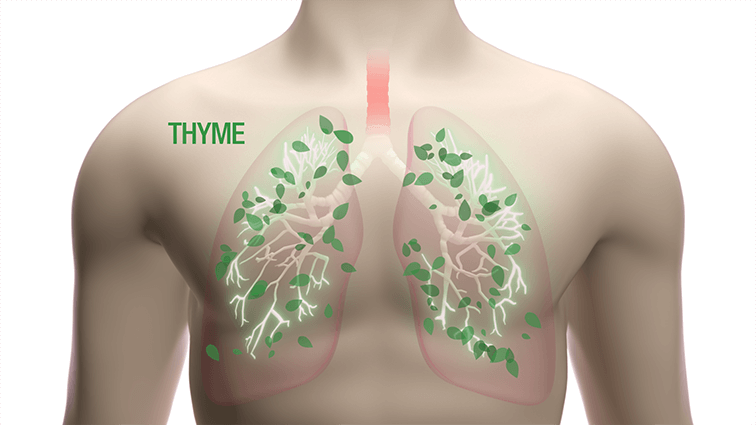 lung thyme